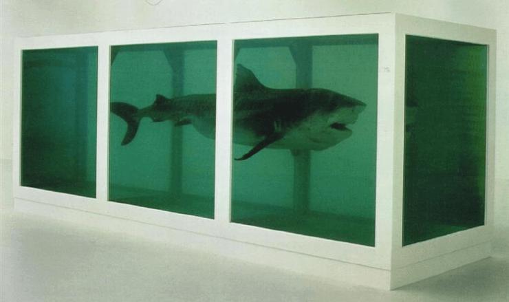イタチザメのホルマリン漬作品