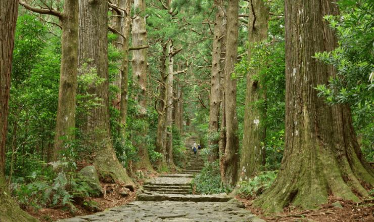 小林陽介の出身地・和歌山県熊野