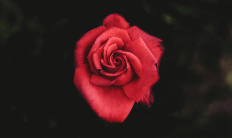 マリーローランサンと詩人アポリネールとの恋について